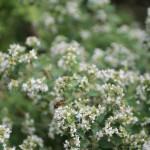 Single bee on flower