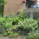 Herbs growing in slate beds